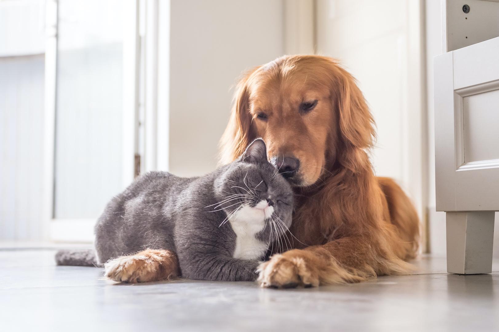 【「ペットのいるご家庭」に教えたい家づくりのポイント~その1~】