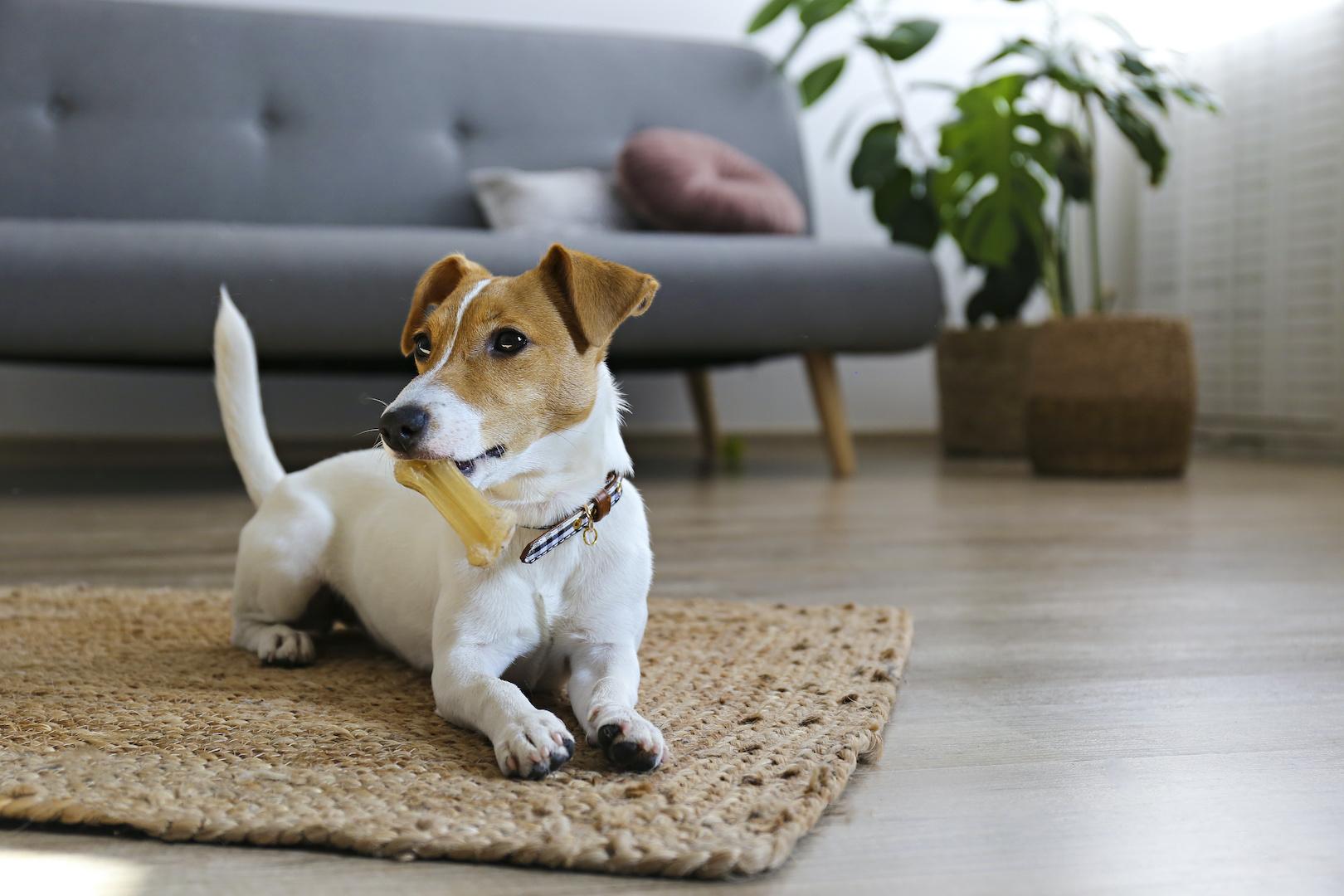【「ペットのいるご家庭」に教えたい家づくりのポイント~その2~】